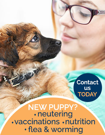 New puppy services, neutering, vaccinations, nutrition