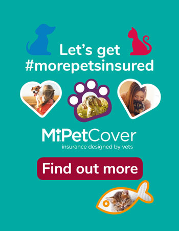 We care for pets in Tile Hill, Coventry | YourVets